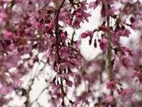 rosa och vita blommor i tilt shift-lins