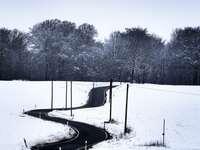 zasněžené pole se stromy během dne