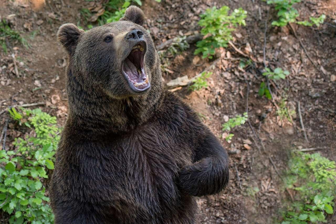 björnen för det andra riket