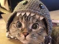 Сладка котка