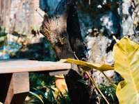 fekete pillangó barna fa kerítés nappali