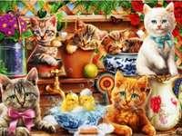 γατάκια ....