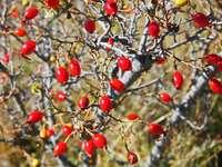 червени кръгли плодове на дърво през деня