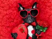 perro del dia de san valentin