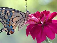 colorful butterfly on the flower