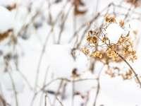 бяло цвете на кафяво стъбло