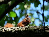 esquilo marrom em galho de árvore durante o dia