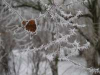 winter, frost, winter