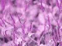 grön växt i närbildfotografering