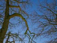 barna csupasz fa kék ég alatt nappali