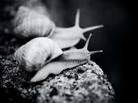 white and brown snail on gray rock