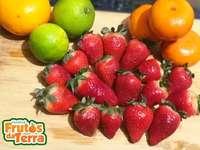 Vruchten van de aarde