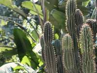 groene cactusplant overdag