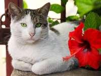 gatito por la flor