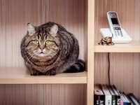 gato sentado en un estante