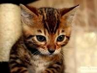 Красиво котенце