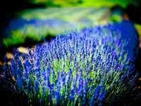 lila und grüne Blume in der Nahaufnahmefotografie