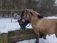 Cavallo polacco Nomen