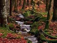potúček v podzimním lese