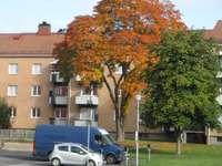 Jesienny obraz.