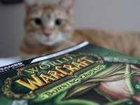 Gato atigrado marrón sobre textil verde y blanco