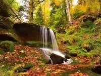 omszałe drzewa i kamienie, wodospad