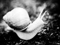 grayscale photo of snail on ground