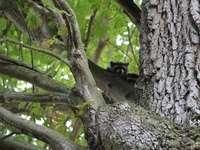 fekete-fehér macska a fán