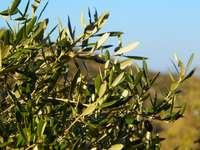 зелено растение под синьо небе през деня