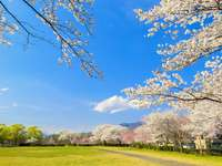 A tavasz gyönyörű
