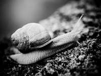 brown snail on gray rock