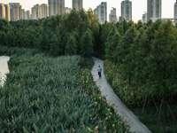 campo de hierba verde cerca de los edificios de la ciudad durante el día