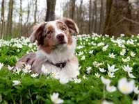 малко куче на цветна поляна