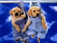 chiens en pantalon