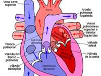 HEART AND ITS PARTS