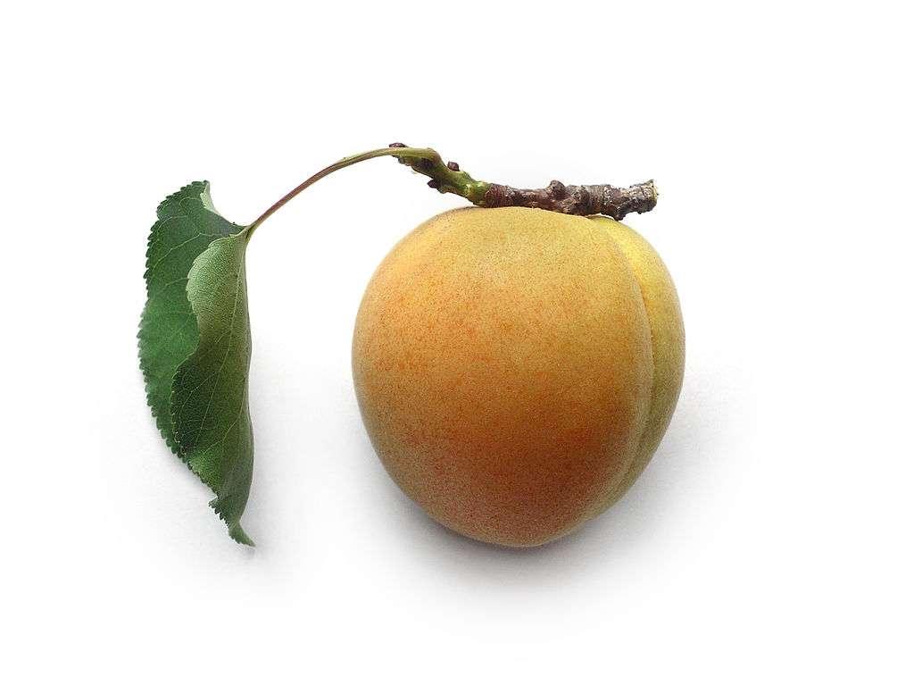 Gemeenschappelijke abrikoos - Abrikoos, gewone abrikoos [4] (Prunus armeniaca L.) - een vaste plantensoort die tot de rozenfamilie behoort. Het komt uit Azië, het geboortegebied van zijn voorkomen omvat Kirgizië, China en Korea (4×3)