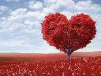 un corazón hermoso