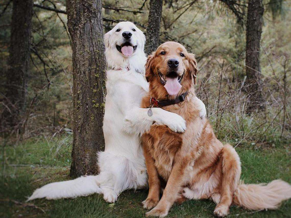 perros abrazandose - Perros sentado en un arbol abrazados (20×15)