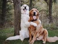 chiens étreignant