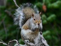 brown and white squirrel on tree branch during daytime