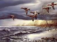 jezioro- kaczki lecące