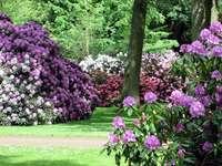 Rhododendron parkerar och botanisk trädgård i Bremen