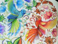 Pajaritos coloridos