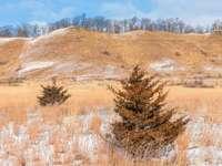 fält för brunt gräs under blå himmel under dagtid