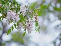 vita blommor i tilt-lins