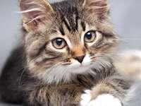gatito mirando