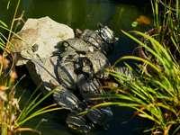 tartaruga nera e grigia su roccia grigia