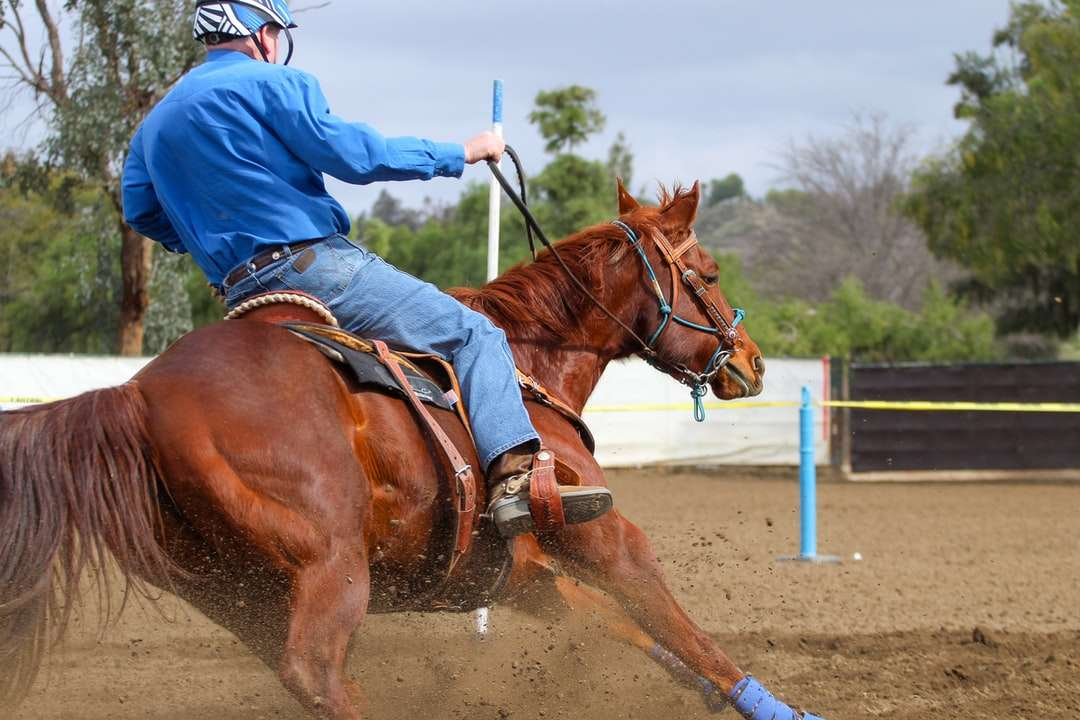 man in blue jacket riding brown horse during daytime - Bob and Itsy round the Hurry Scurry (gymkhana jumping) pole (4×3)