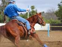 Hombre de chaqueta azul a caballo marrón durante el día