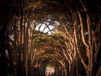 dívka v bílém plášti chůzi na cestě mezi holými stromy